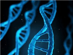 Global DNA Methylation Market to Reach $8.88bn by 2030